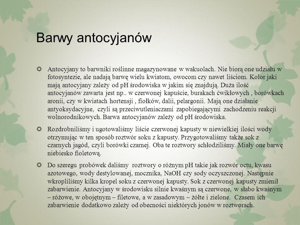Barwy antocyjanów  Antocyjany to barwniki roślinne magazynowane w wakuolach. Nie biorą one udziału w fotosyntezie, ale nadają barwę wielu kwiatom, ow