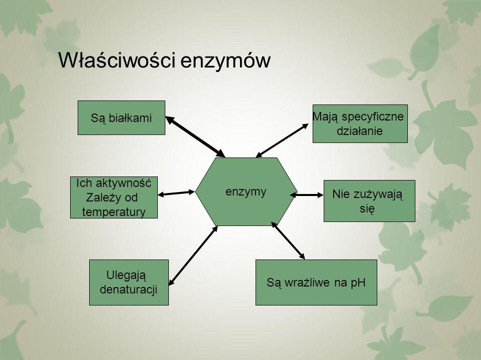 Właściwości enzymów enzymy Są białkami Mają specyficzne działanie Ulegają denaturacji Nie zużywają się Są wrażliwe na pH Ich aktywność Zależy od tempe