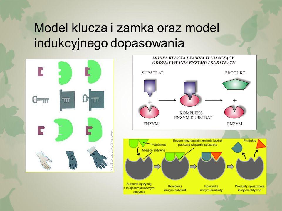 Hamowanie działania enzymów przez inhibitor kompetycyjny Inhibitor kompetycyjny ma budowę podobną do substratu, dzięki czemu może przyłączać się do centrum aktywnego enzymu i uniemożliwia w ten sposób wiązanie substratu i przebieg reakcji enzymatycznej
