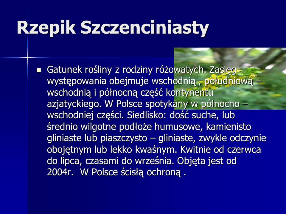Rzepik Szczenciniasty Gatunek rośliny z rodziny różowatych.