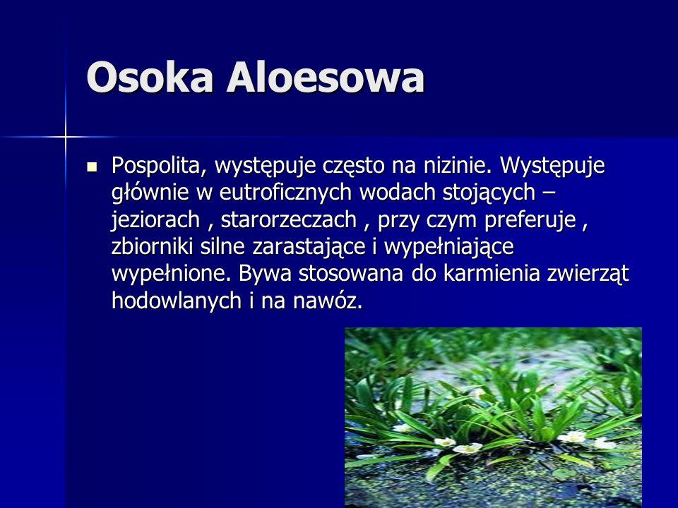 Osoka Aloesowa Pospolita, występuje często na nizinie. Występuje głównie w eutroficznych wodach stojących – jeziorach, starorzeczach, przy czym prefer