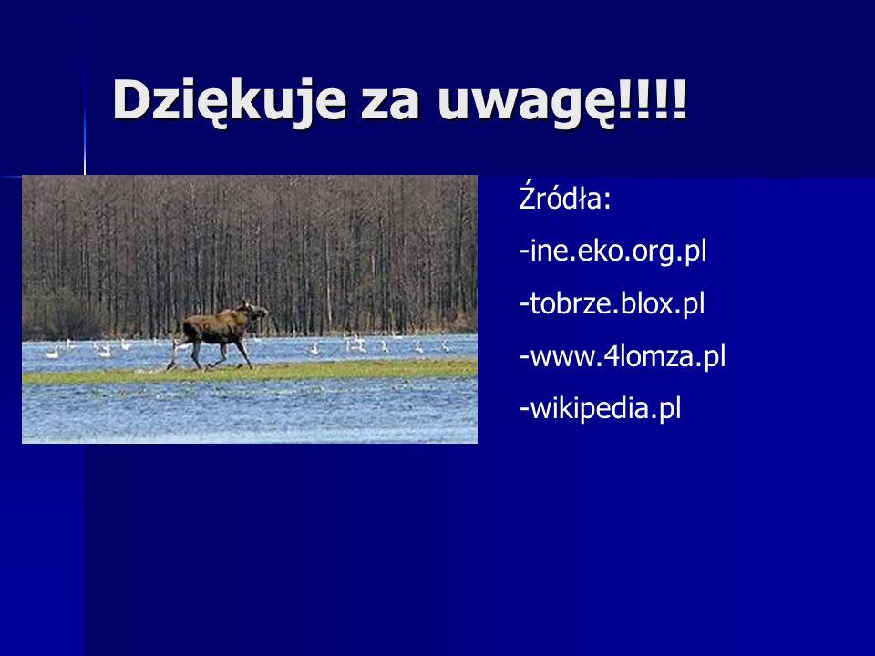 Dziękuje za uwagę!!!! Źródła: -ine.eko.org.pl -tobrze.blox.pl -www.4lomza.pl -wikipedia.pl
