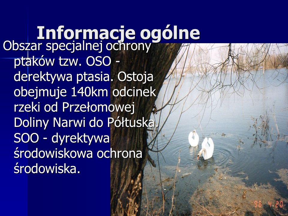 Informacje ogólne Obszar specjalnej ochrony ptaków tzw. OSO - derektywa ptasia. Ostoja obejmuje 140km odcinek rzeki od Przełomowej Doliny Narwi do Pół