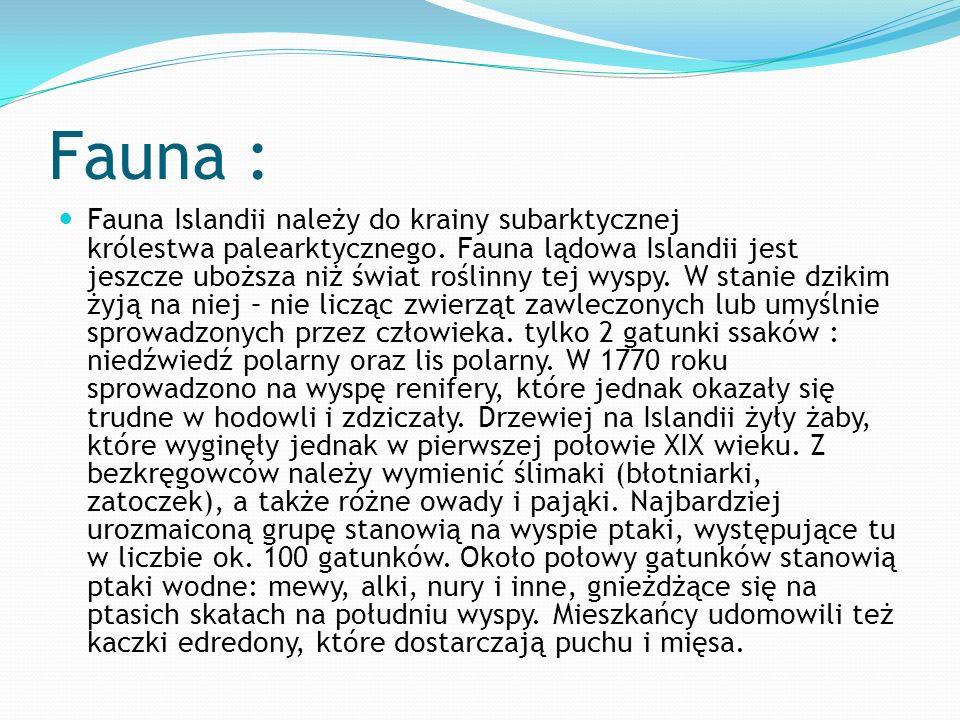 Fauna : Fauna Islandii należy do krainy subarktycznej królestwa palearktycznego. Fauna lądowa Islandii jest jeszcze uboższa niż świat roślinny tej wys