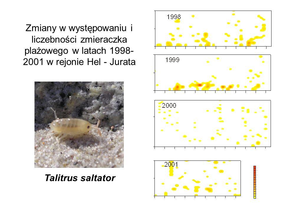 Zmiany w występowaniu i liczebności zmieraczka plażowego w latach 1998- 2001 w rejonie Hel - Jurata Talitrus saltator