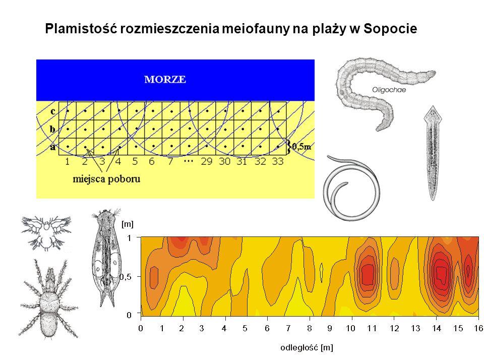Plamistość rozmieszczenia meiofauny na plaży w Sopocie