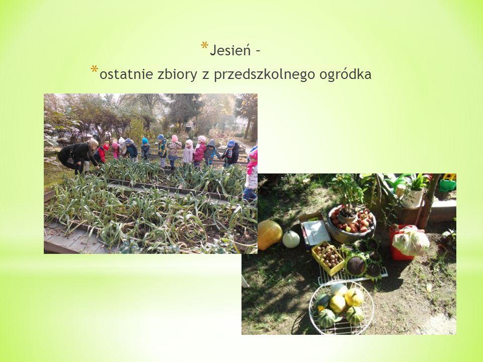 * Jesień – * ostatnie zbiory z przedszkolnego ogródka