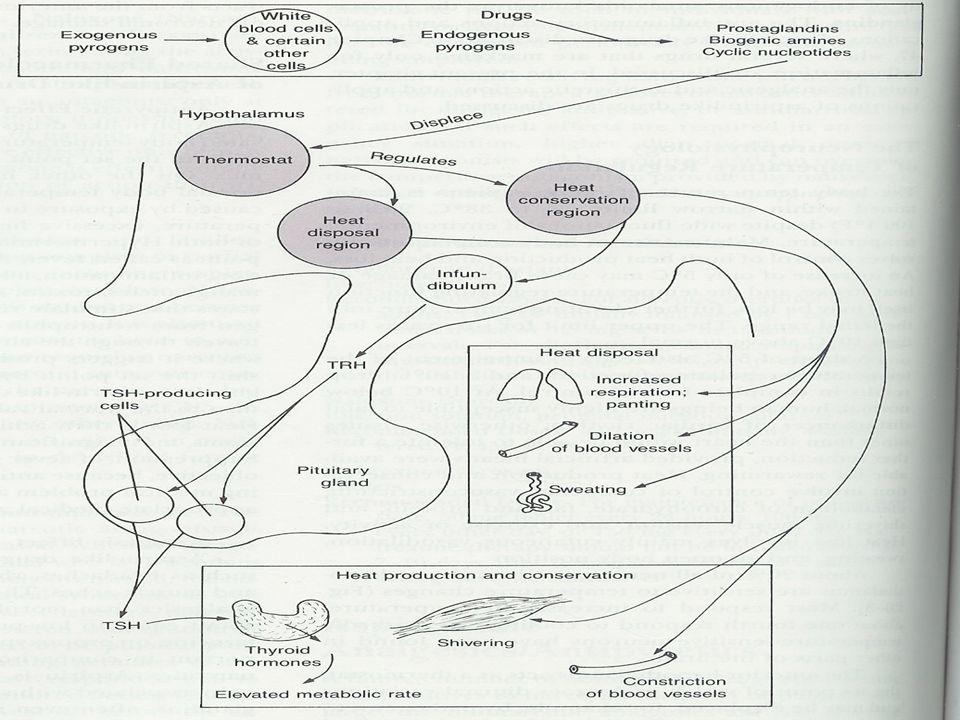 viruses,bacteria,tocsins,endogenous pirogens cytokins(Il-1;TNF;Il-6), Hypothalamus thermostat reset autonomic system reaction,vasoconstriction shiveing,vasodilatation, fever Blood PGH2