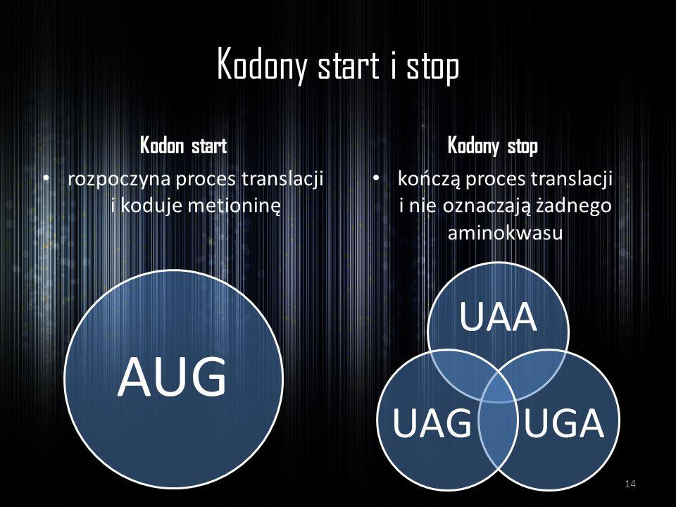 Kodony start i stop Kodon start rozpoczyna proces translacji i koduje metioninę Kodony stop kończą proces translacji i nie oznaczają żadnego aminokwas