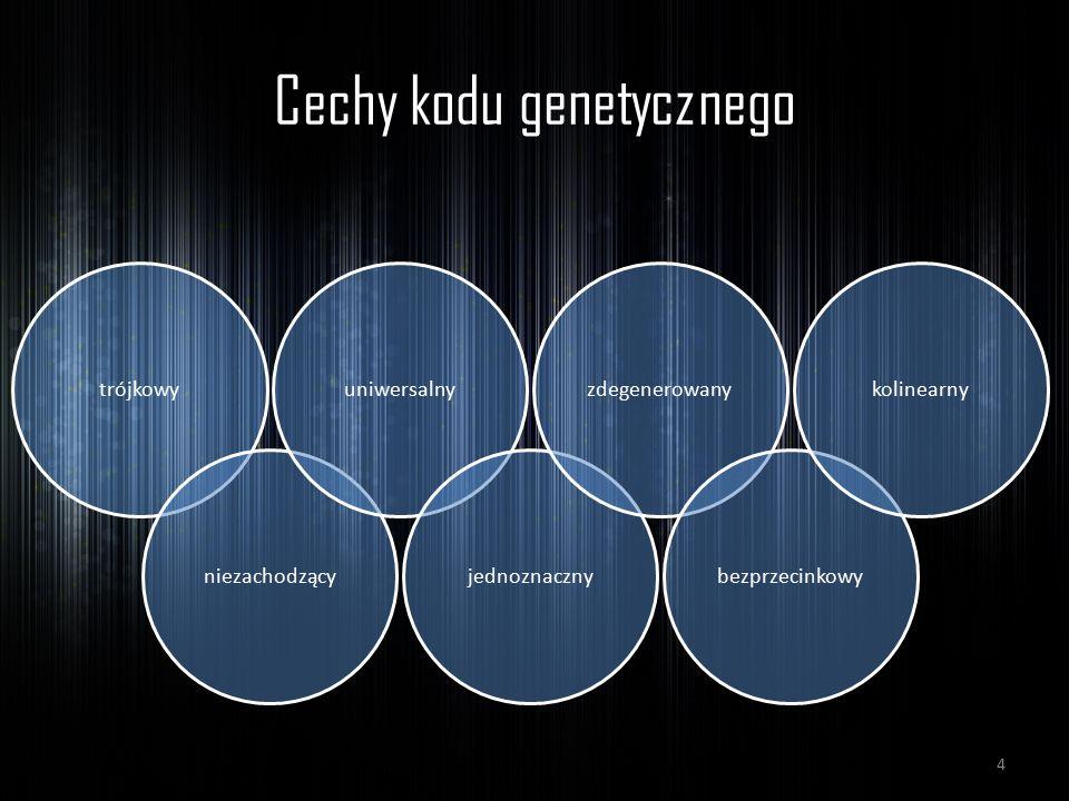 Cechy kodu genetycznego trójkowyniezachodzącyuniwersalnyjednoznacznyzdegenerowanybezprzecinkowykolinearny 4
