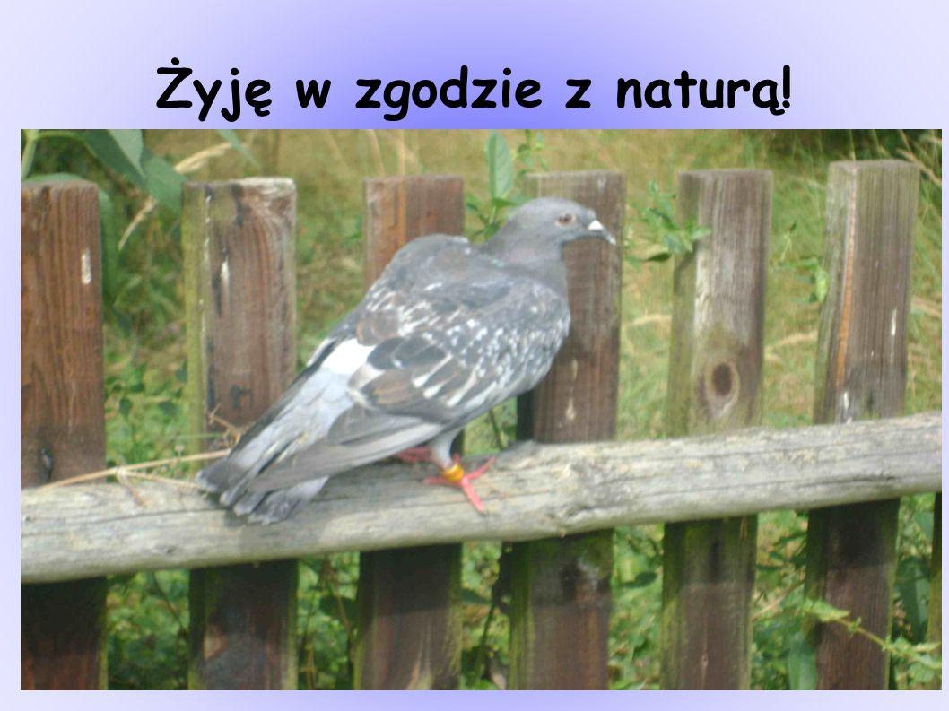 Żyję w zgodzie z naturą!
