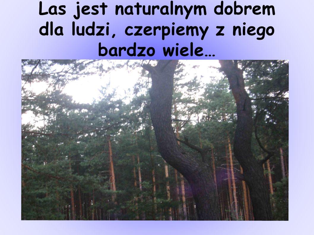 Las jest naturalnym dobrem dla ludzi, czerpiemy z niego bardzo wiele…