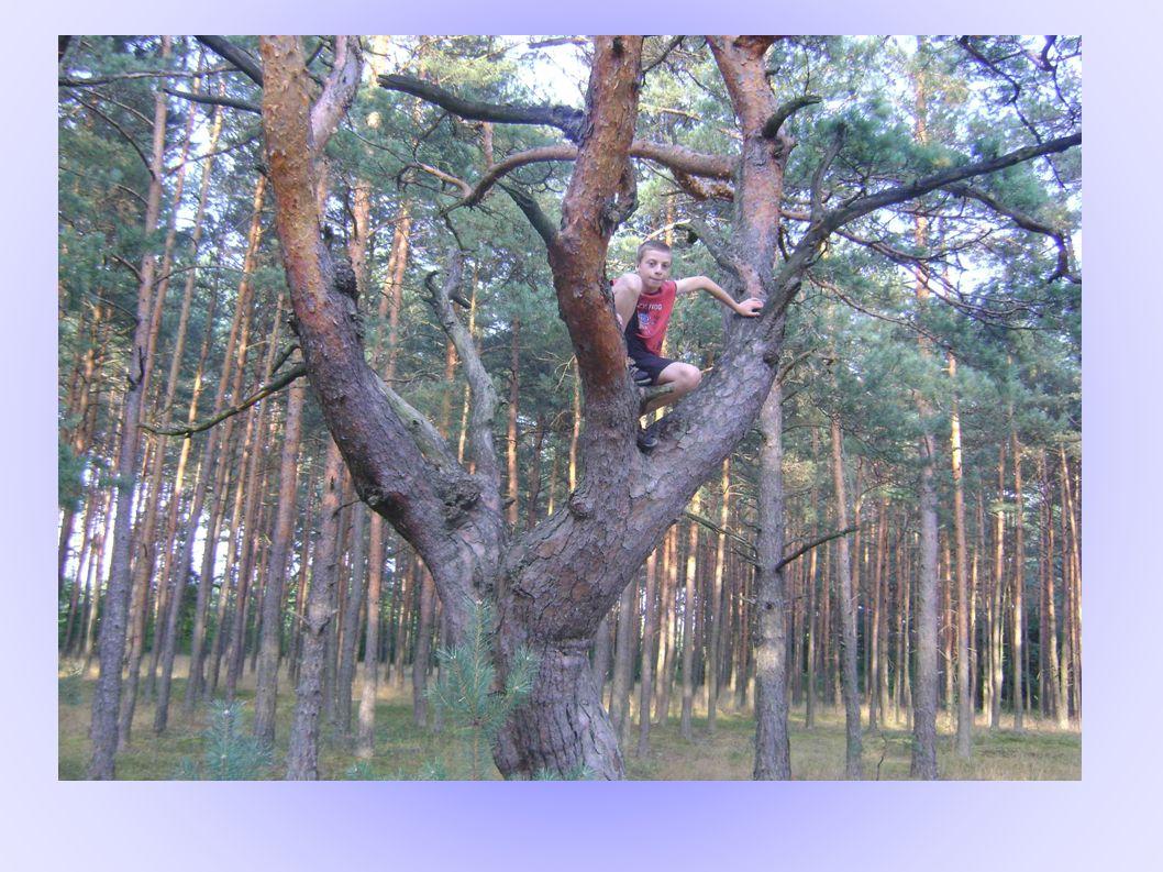 Porosty i mchy zadziwiają mnie swoją wszechobecnością – są dywanem lasu.