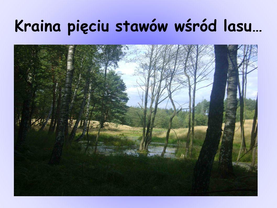 Kraina pięciu stawów wśród lasu…