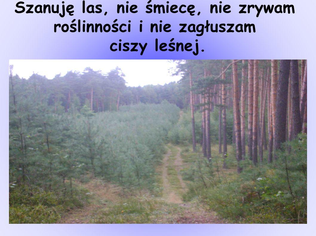 Szanuję las, nie śmiecę, nie zrywam roślinności i nie zagłuszam ciszy leśnej.