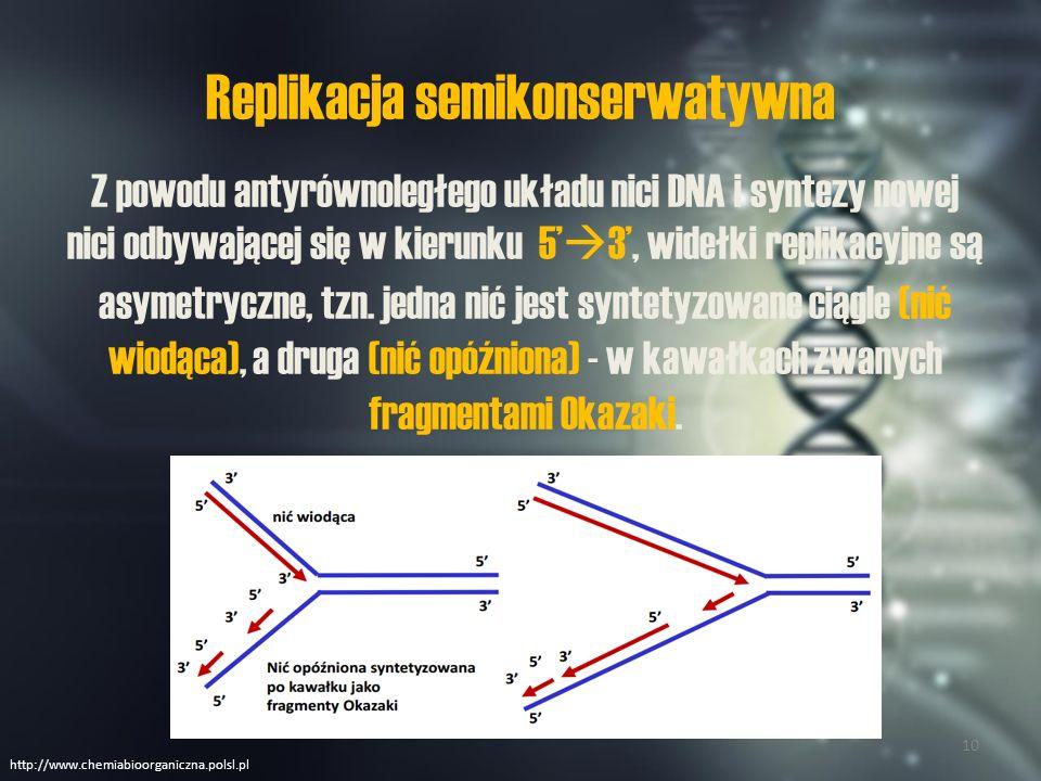 Replikacja semikonserwatywna na nici opóźnionej Startery złożone z RNA powstają co ok.