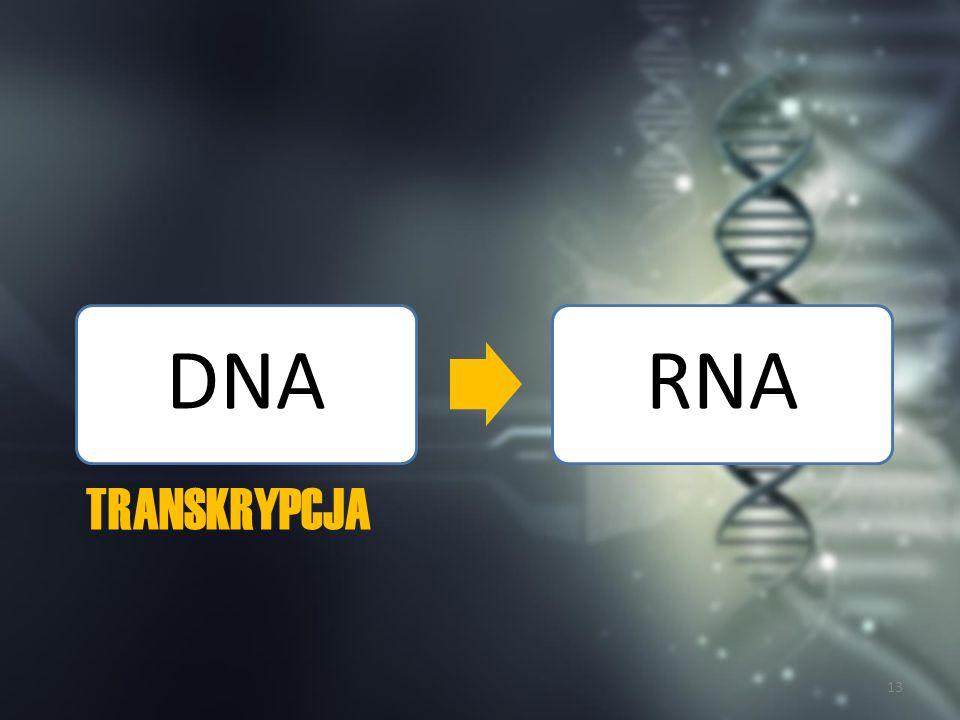 Ogólny przebieg transkrypcji http://www.chemiabioorganiczna.polsl.pl 14