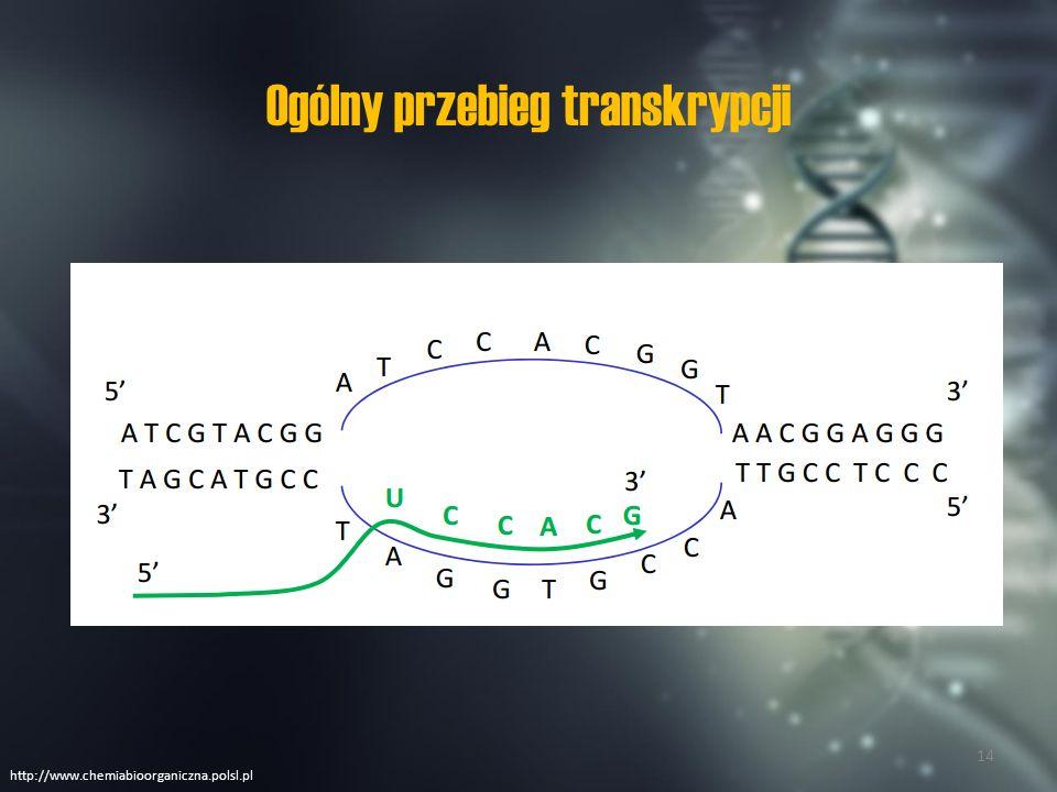Podstawowe elementy aparatu transkrypcyjnego http://www.chemiabioorganiczna.polsl.pl 15
