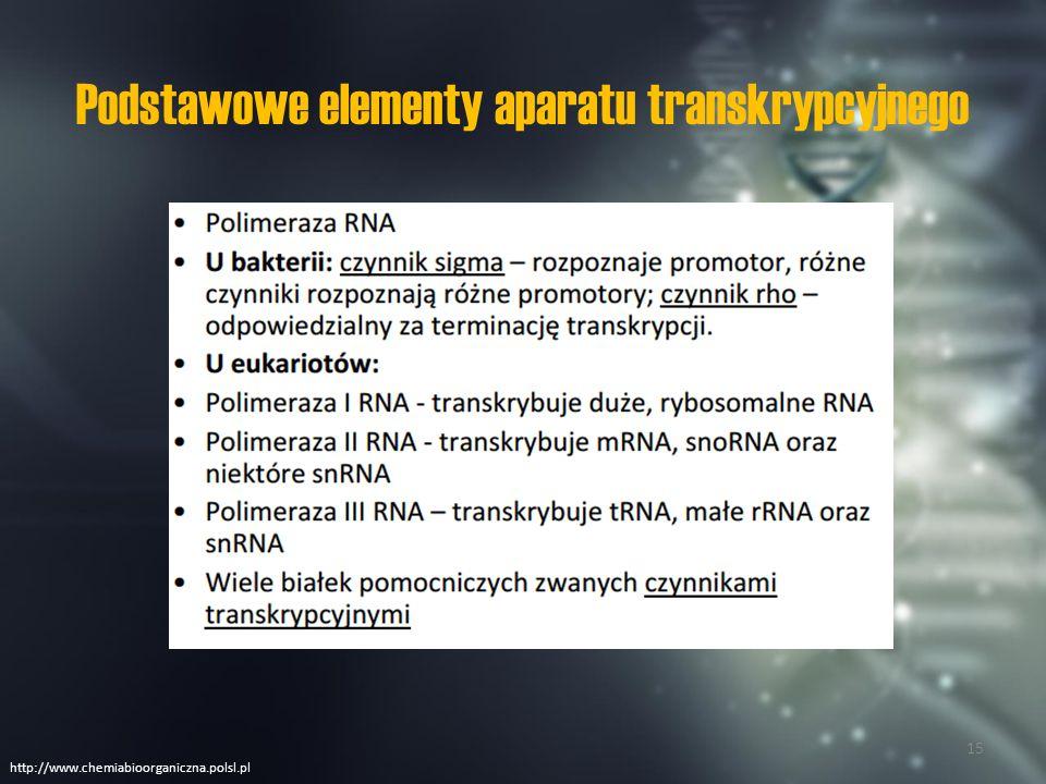 Polimerazy RNA Homologi Homlogi Eukarionty Prokarionty www.arabidopsis.pl/ 16