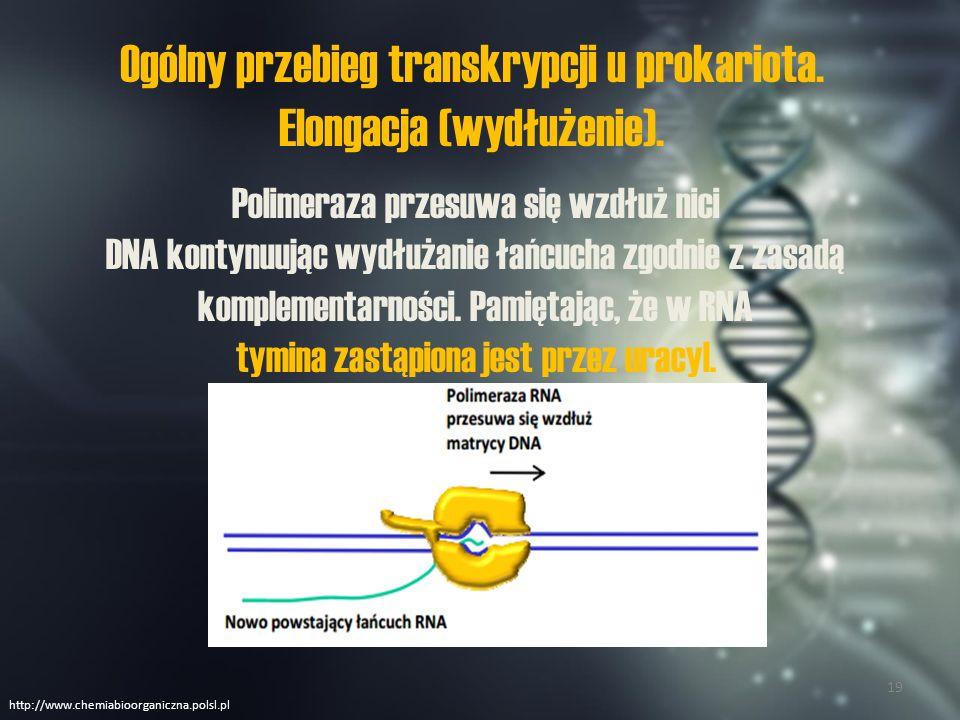 Ogólny przebieg transkrypcji u prokariota.Terminacja (zakończenie).
