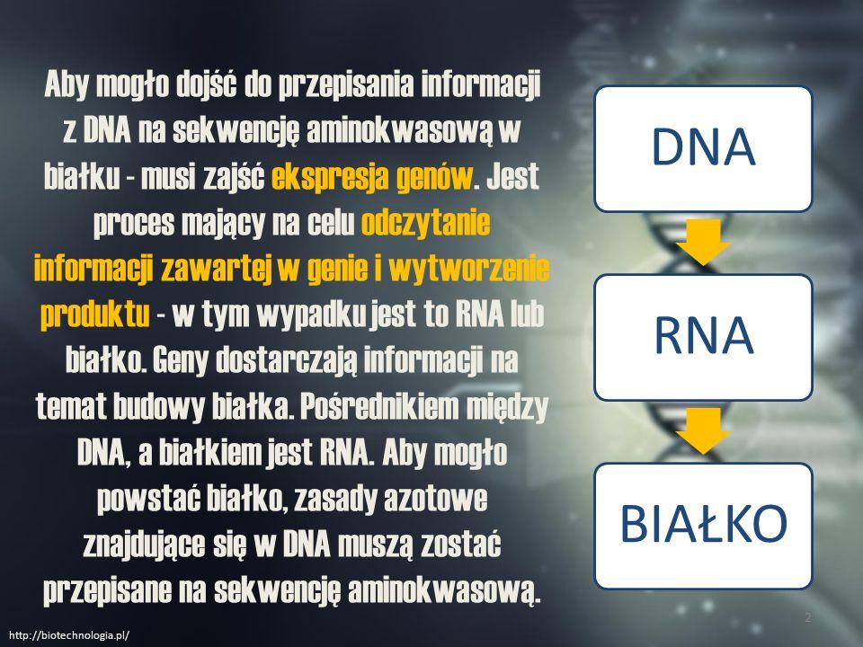 REPLIKACJA DNA 3