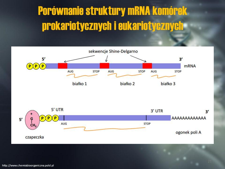 Transkrypcja u prokariontów i eukariontów ProkariontyEukarionty Proces zachodzi w cytoplazmie komórkiProces zachodzi w jądrze komórkowym oraz w mitochondriach i plastydach Występuje tylko jeden rodzaj polimerazy RNA.