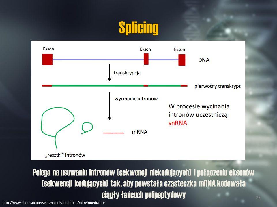 Rodzaje RNA mRNA rRNA tRNA upendrats.blogspot.com 27
