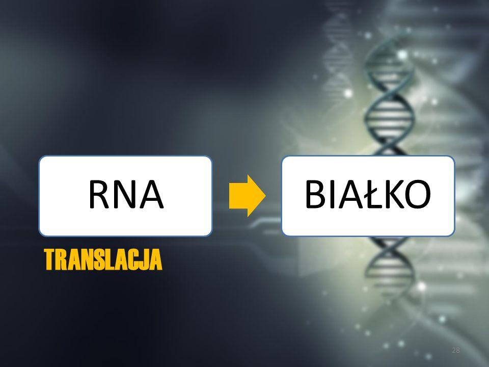 Ogólny przebieg translacji Translacja to proces syntezy łańcucha polipeptydowego na matrycy mRNA.