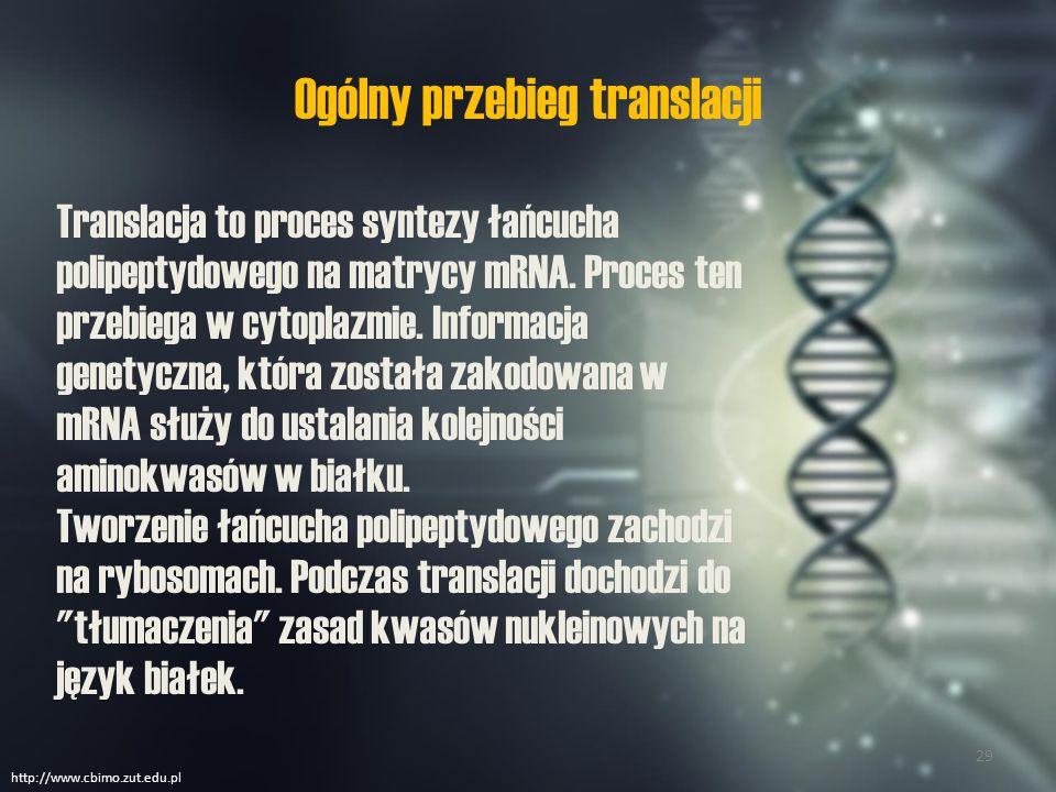 Do przebiegu translacji potrzebne są następujące elementy ATPrybosomyaminokwasytRNAmRNA http://www.cbimo.zut.edu.pl 30