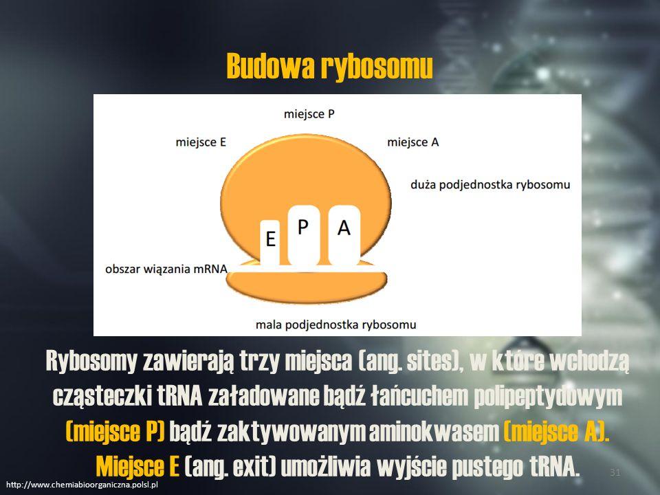 Ogólny przebieg translacji http://www.chemiabioorganiczna.polsl.pl 32
