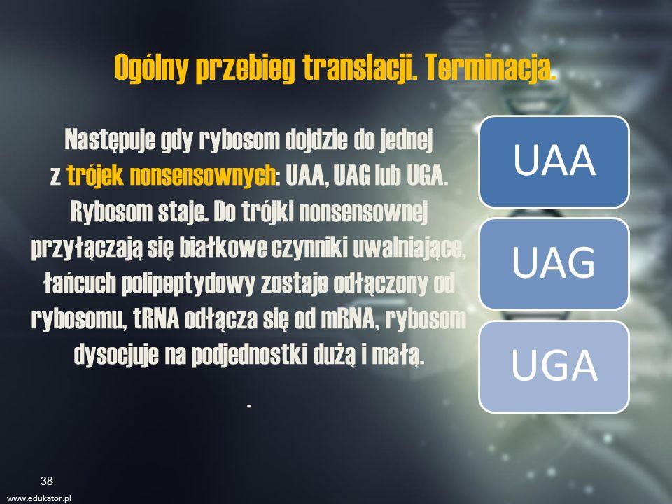 Obróbka potranslacyjna Produkt translacji to jeszcze nie jest gotowe białko.