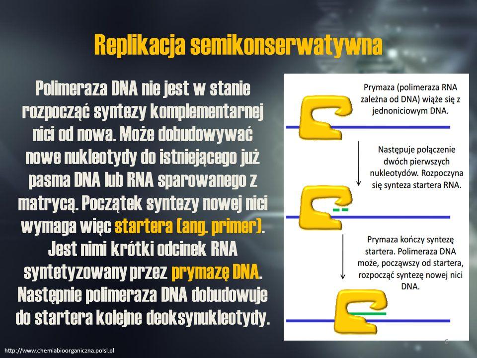 Replikacja semikonserwatywna Nić DNA służąca za instrukcję do syntezy nowej nici zwie się nicią matrycową.