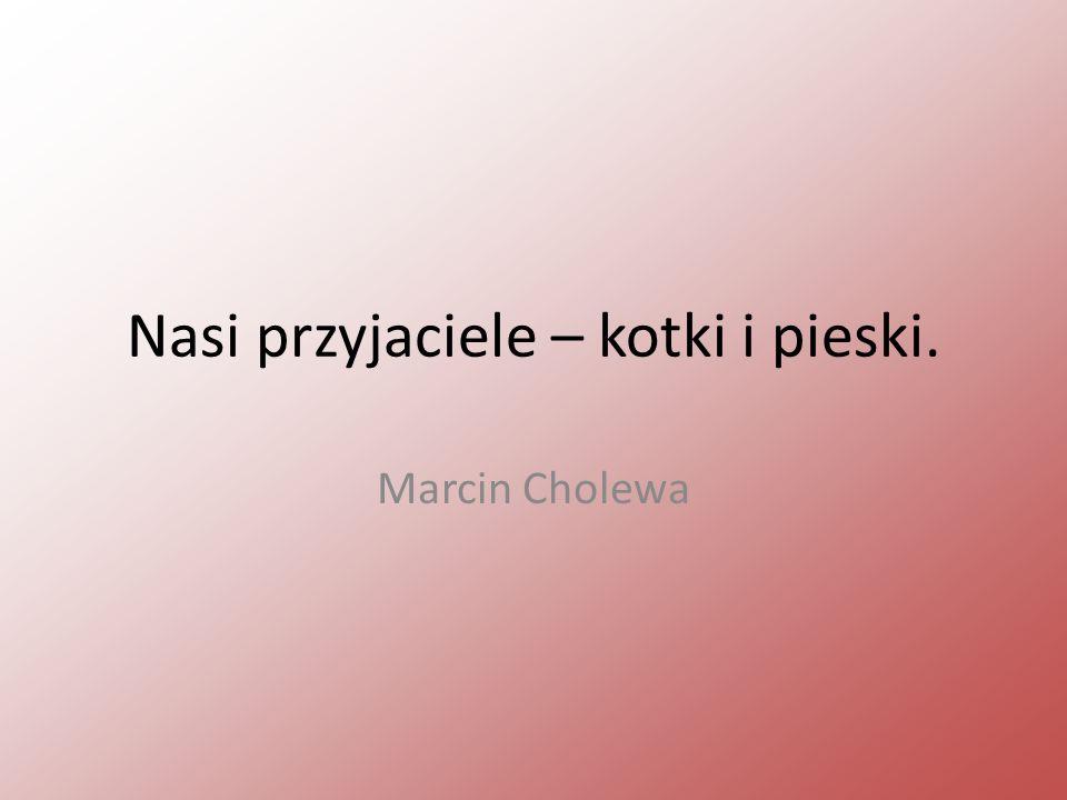 Nasi przyjaciele – kotki i pieski. Marcin Cholewa