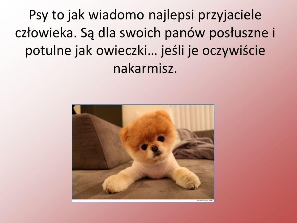 Psy to jak wiadomo najlepsi przyjaciele człowieka.