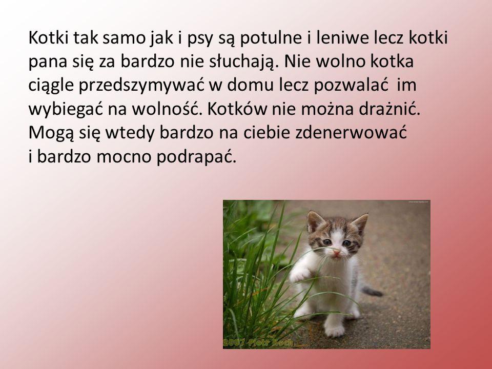 Kotki tak samo jak i psy są potulne i leniwe lecz kotki pana się za bardzo nie słuchają. Nie wolno kotka ciągle przedszymywać w domu lecz pozwalać im