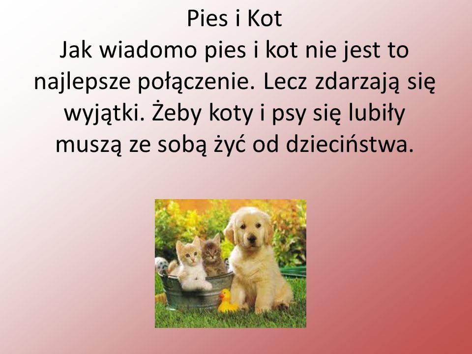 Pies i Kot Jak wiadomo pies i kot nie jest to najlepsze połączenie.