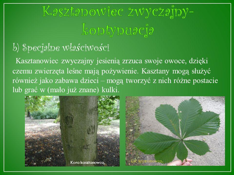 a) Ogólne informacje Kasztanowiec zwyczajny (Aesculus hippocastanum L.) występuje naturalnie na Bałkanach, dorasta do 25-30 metrów wysokości.