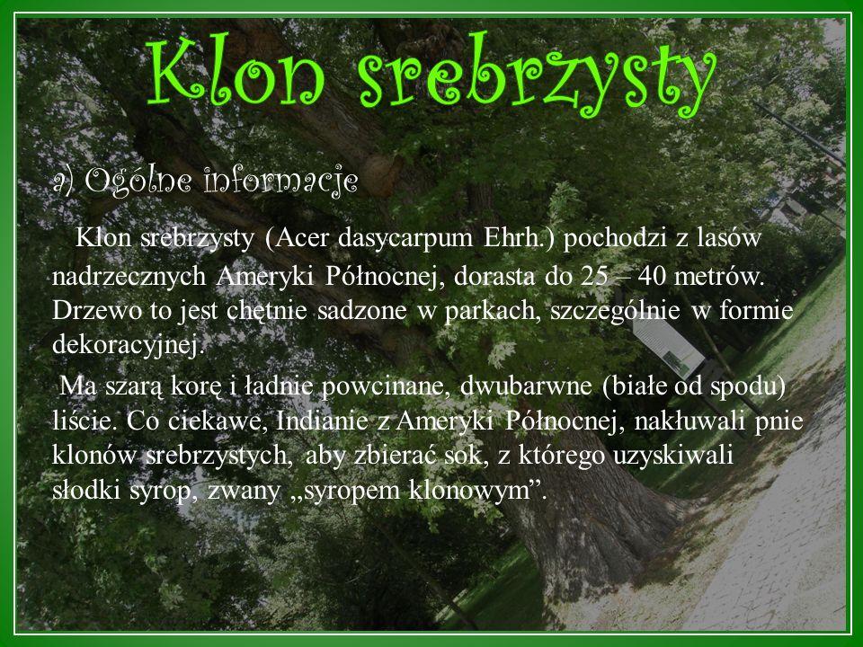 b) Specjalne wła ś ciwo ś ci Po przeczytaniu dendrobajki o olszy czarnej wywnioskowałśmy, że drzewo ma ciemną korę i piękne, zielone liście.