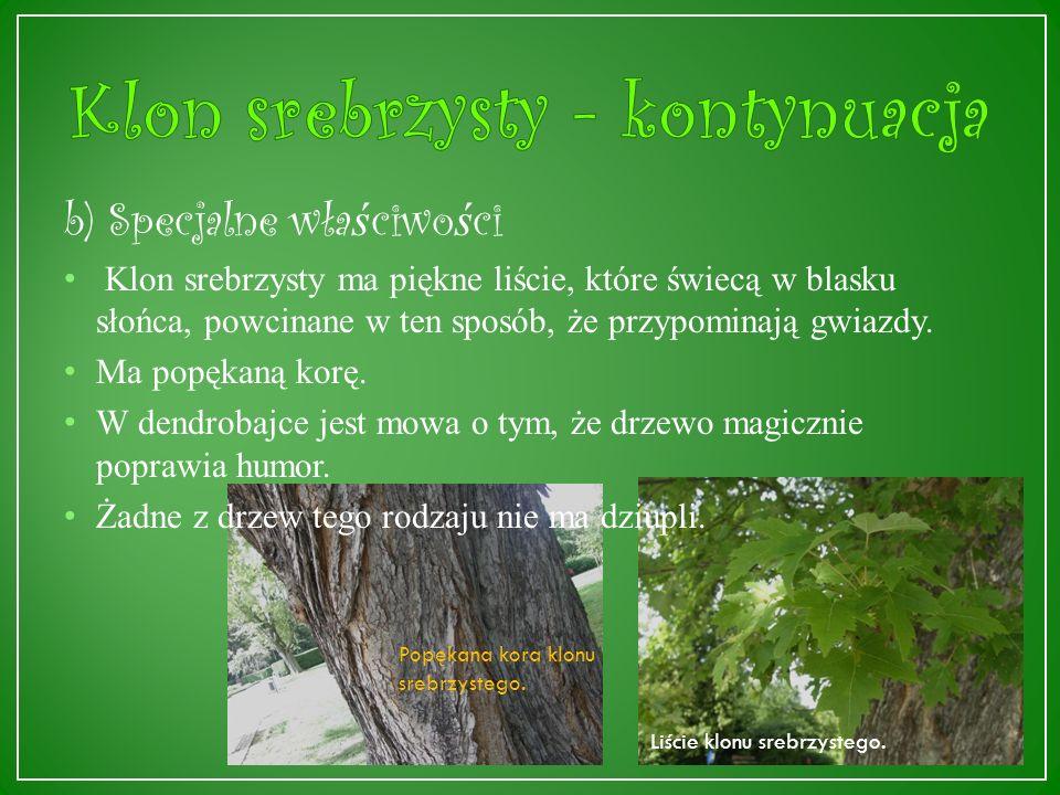 a) Ogólne informacje Klon srebrzysty (Acer dasycarpum Ehrh.) pochodzi z lasów nadrzecznych Ameryki Północnej, dorasta do 25 – 40 metrów.