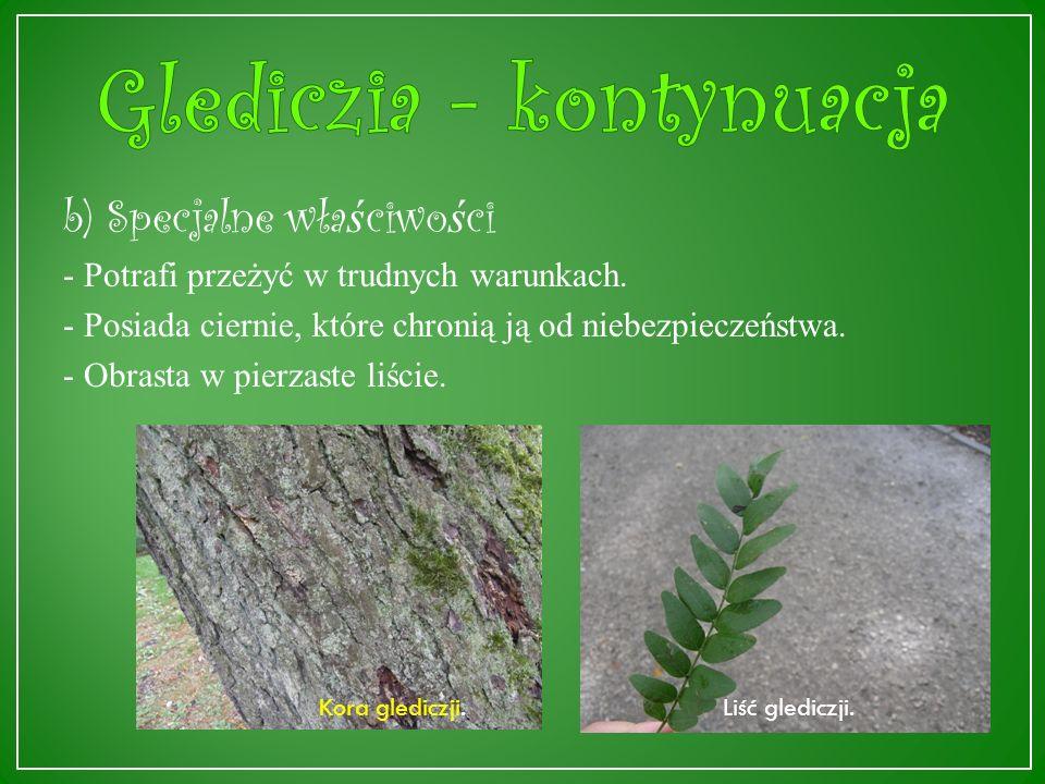 a) Informacje ogólne Glediczia (Gleditsia Tricanthos L.) pochodzi ze środkowych i wschodnich rejonów Ameryki Północnej, dorasta do ok.