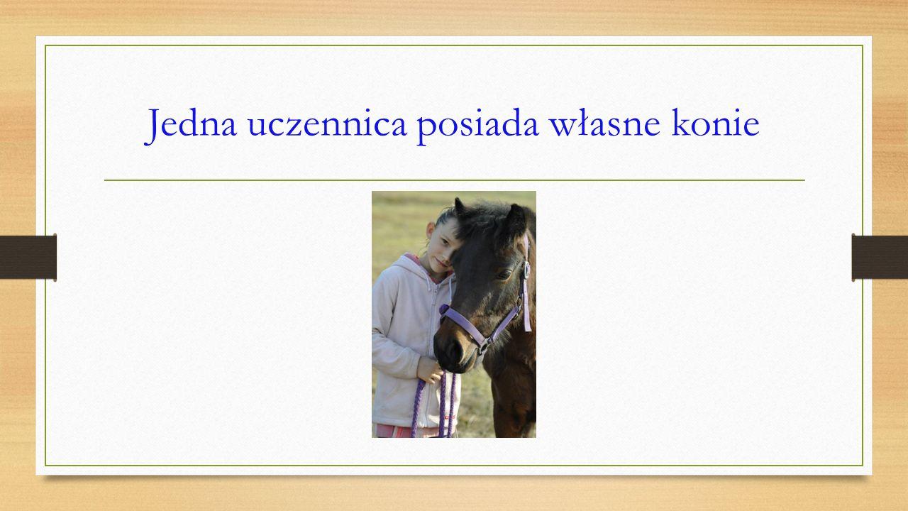 W naszej klasie jest spore zainteresowanie końmi
