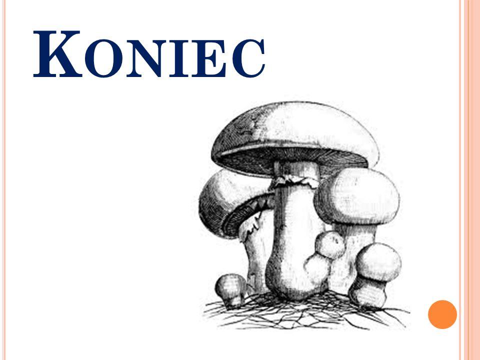 K ONIEC