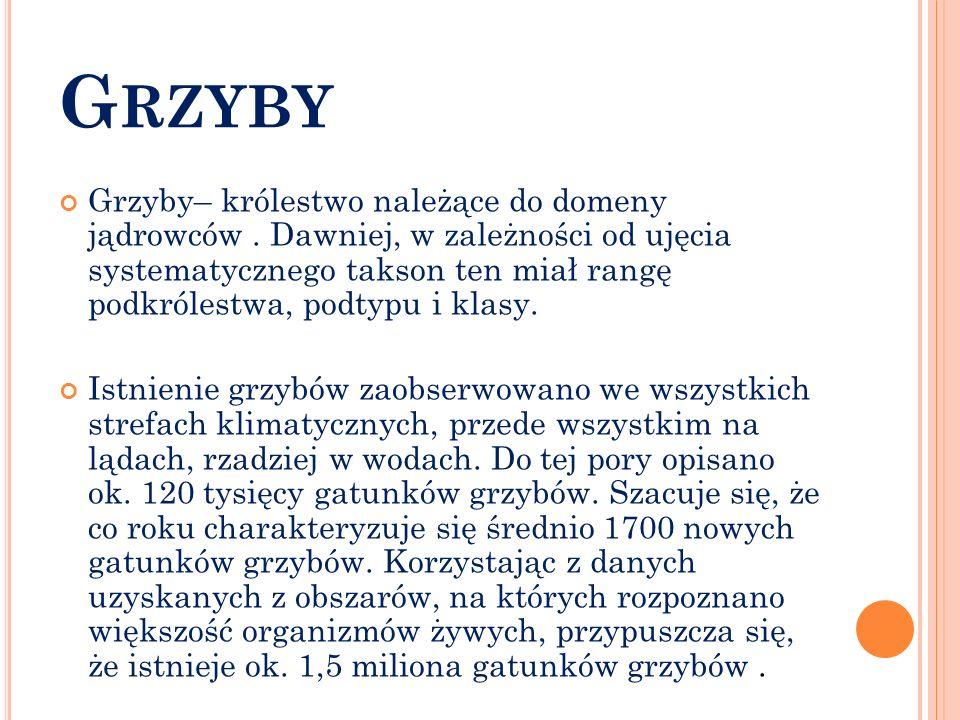 G RZYBY Grzyby– królestwo należące do domeny jądrowców. Dawniej, w zależności od ujęcia systematycznego takson ten miał rangę podkrólestwa, podtypu i