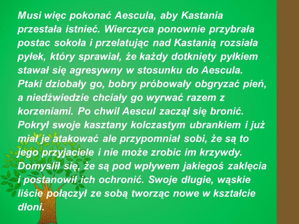 Musi więc pokonać Aescula, aby Kastania przestała istnieć.