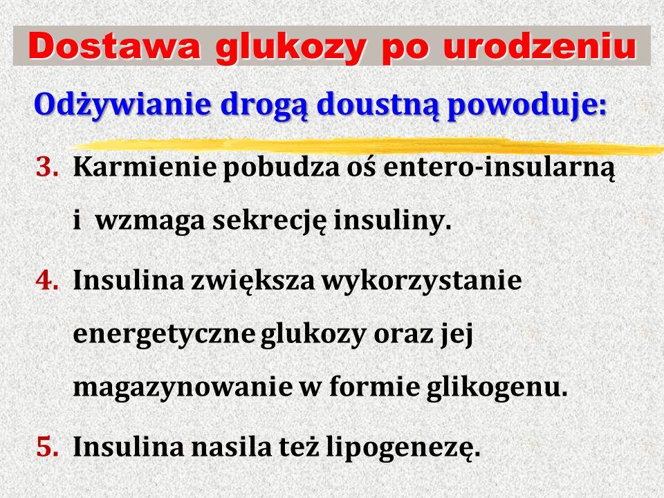 Dostawa glukozy po urodzeniu Odżywianie drogą doustną powoduje: 3.Karmienie pobudza oś entero-insularną i wzmaga sekrecję insuliny. 4.Insulina zwiększ