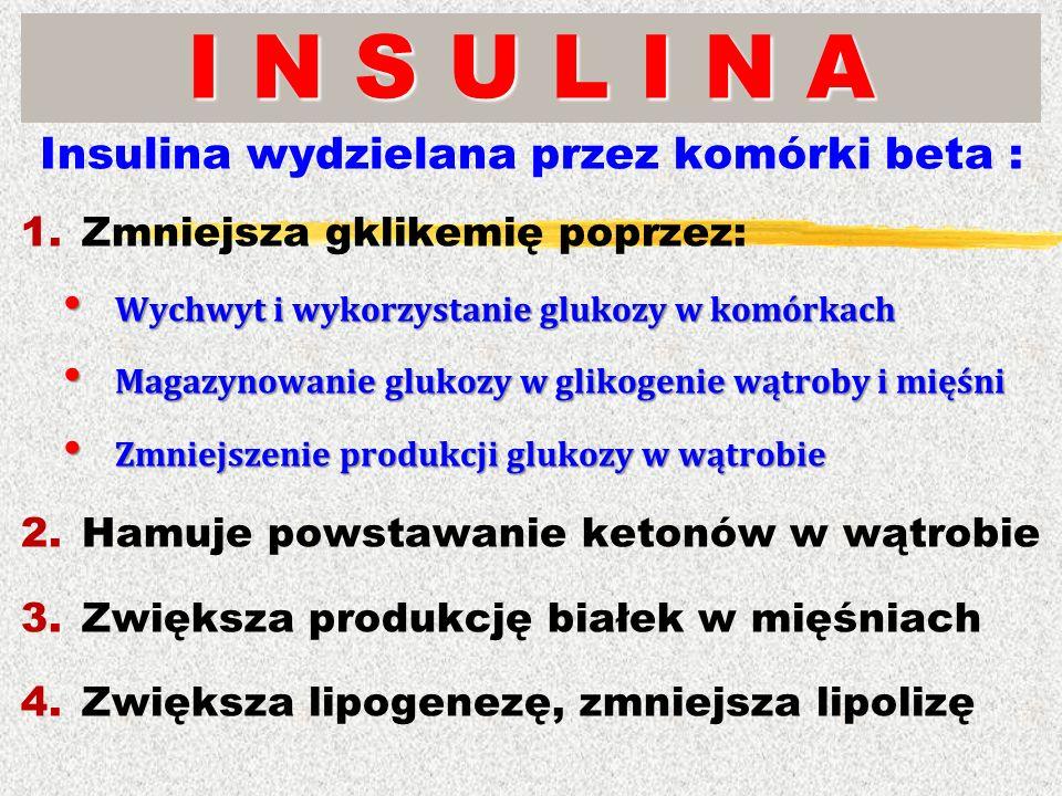 I N S U L I N A Insulina wydzielana przez komórki beta : 1.Zmniejsza gklikemię poprzez: Wychwyt i wykorzystanie glukozy w komórkach Wychwyt i wykorzys