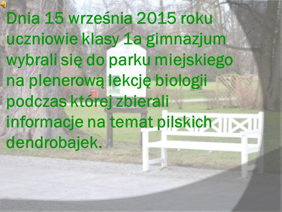 Dnia 15 września 2015 roku uczniowie klasy 1a gimnazjum wybrali się do parku miejskiego na plenerową lekcję biologii podczas której zbierali informacje na temat pilskich dendrobajek.