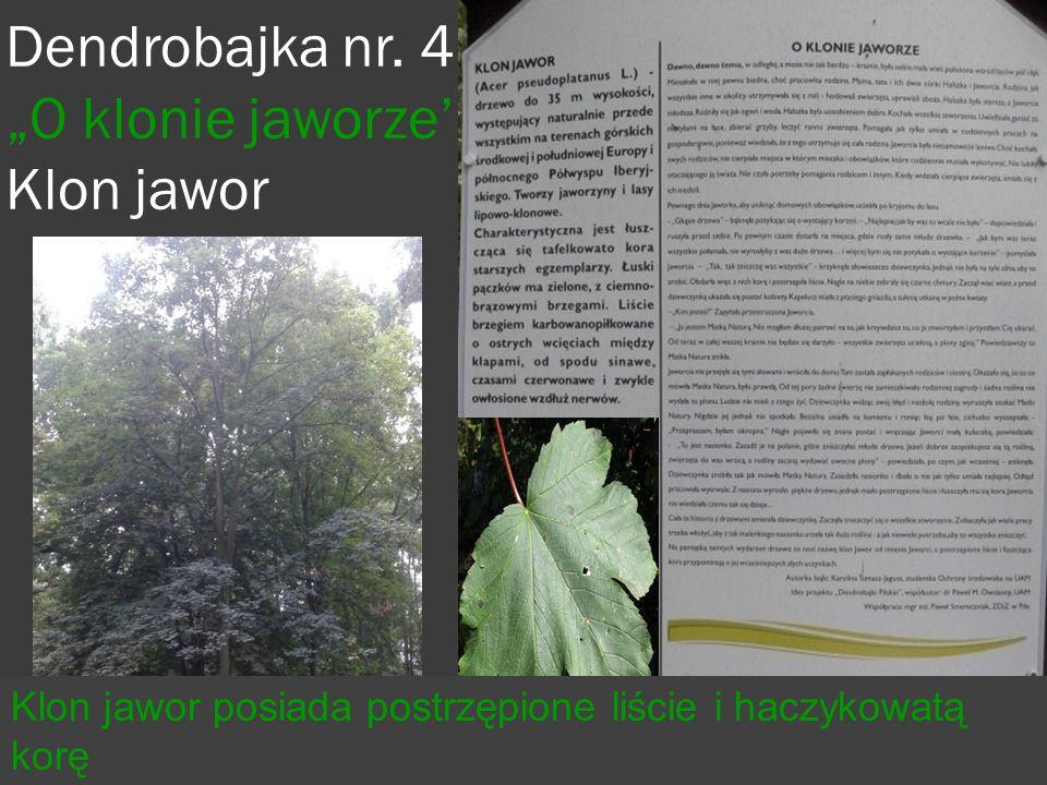 Prezentacje przygotowali:  Gabrysia Bazimierowska  Daria Badzińska  Karol Wiśniowiecki  Adrian Senger