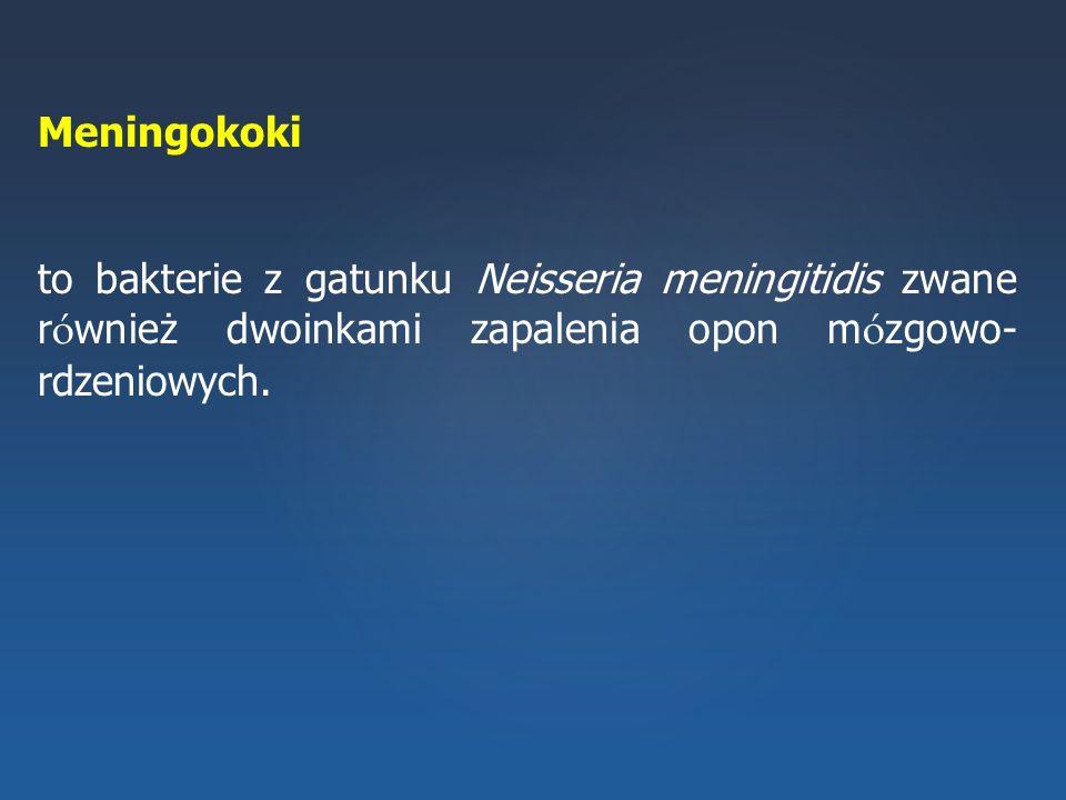 Meningokoki to bakterie z gatunku Neisseria meningitidis zwane r ó wnież dwoinkami zapalenia opon m ó zgowo- rdzeniowych.