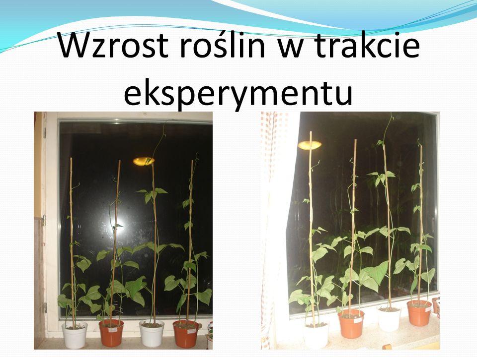 Wzrost roślin w trakcie eksperymentu